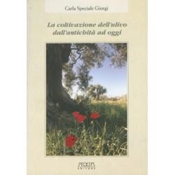 La coltivazione dell'ulivo dall'antichità ad oggi